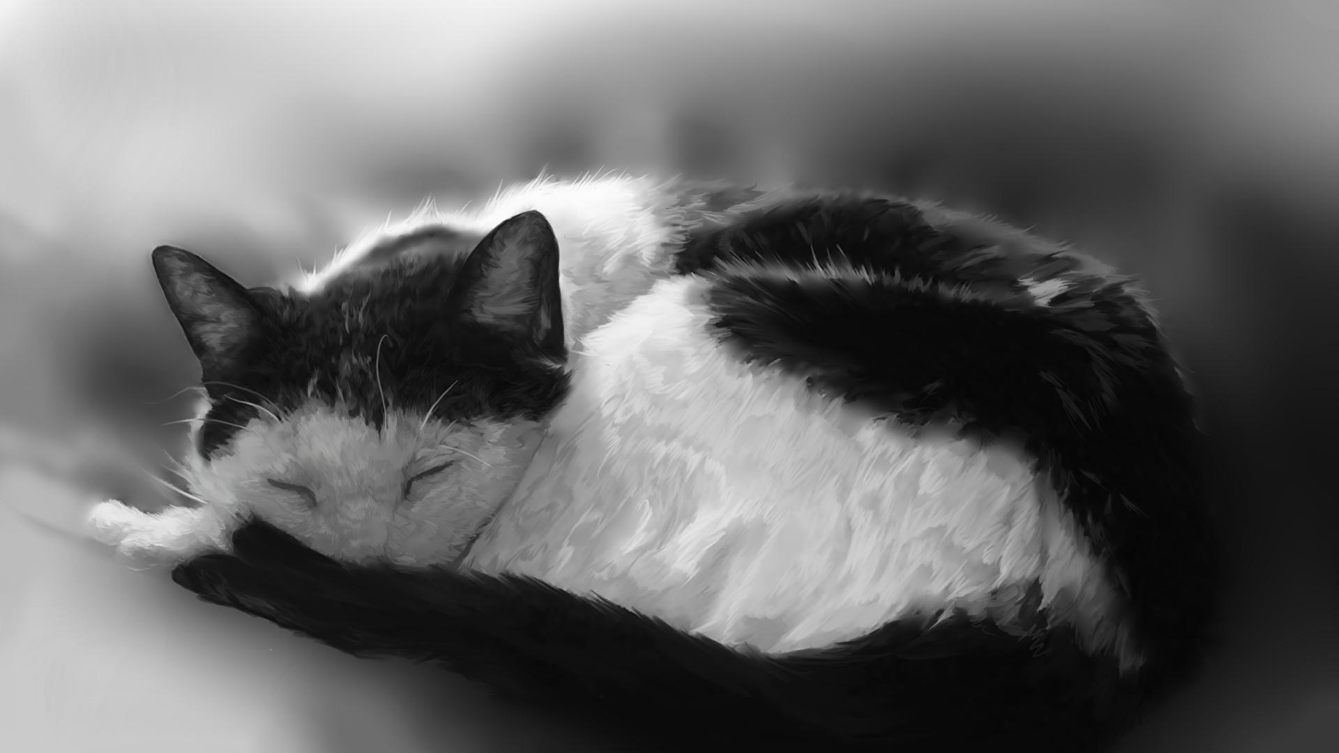 壁紙 1920x1080 飼い猫 描かれた壁紙 眠る 白黒 動物