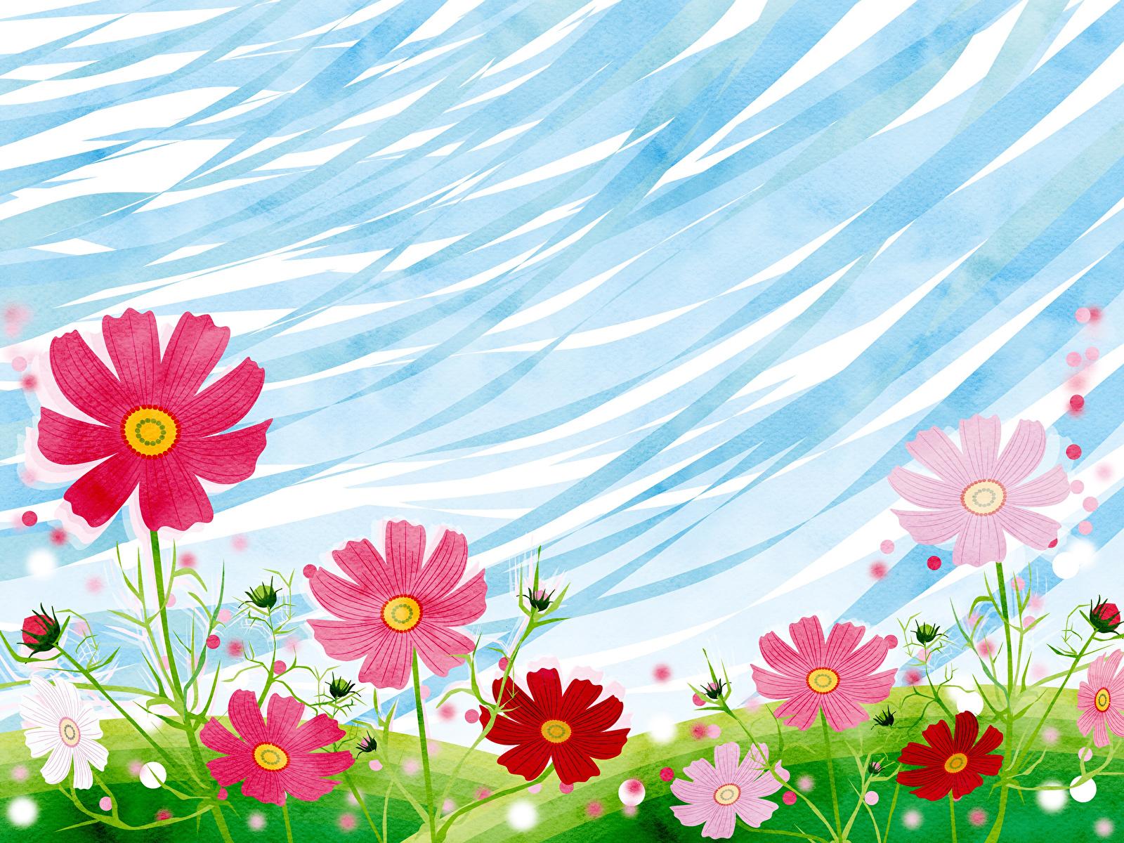 Bilder von Blumen Kosmeen Grünland Gezeichnet 1600x1200 Blüte Schmuckkörbchen