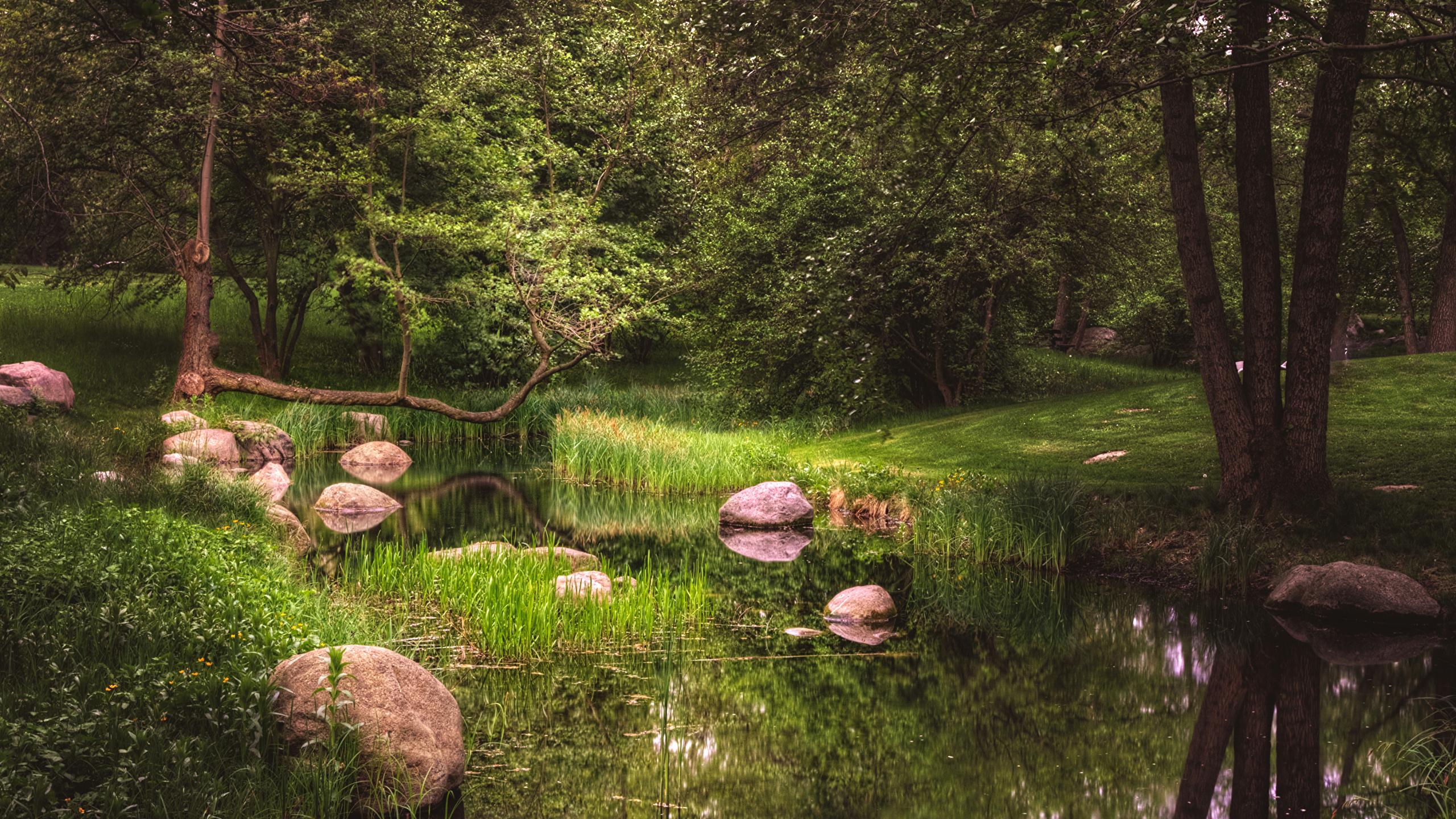2560x1440、ベルリン、ドイツ、公園、石、池、Britzer Garten、木、自然、