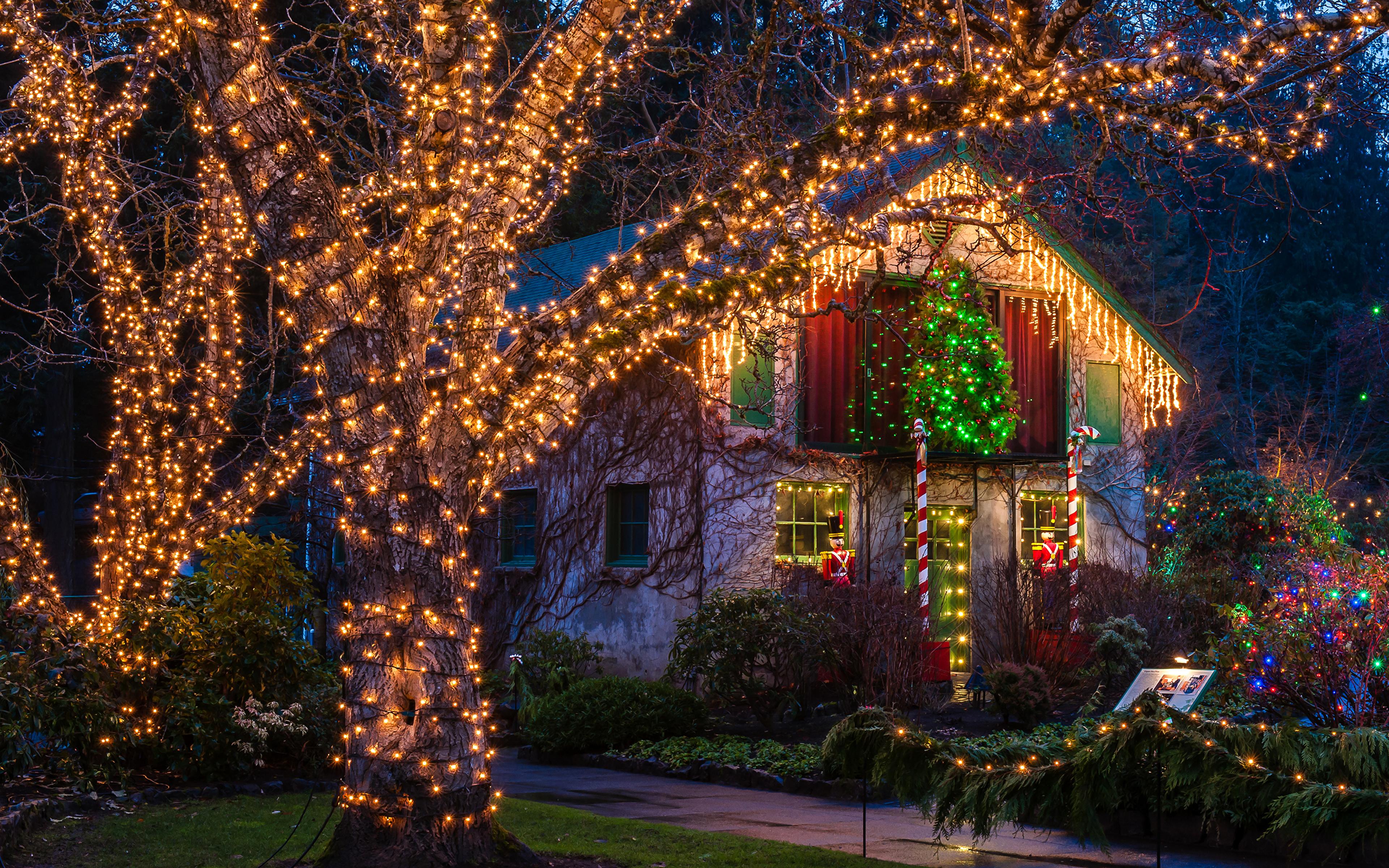 Christmas Bush Lights.Photo Vancouver Canada Christmas Butchart Gardens 3840x2400