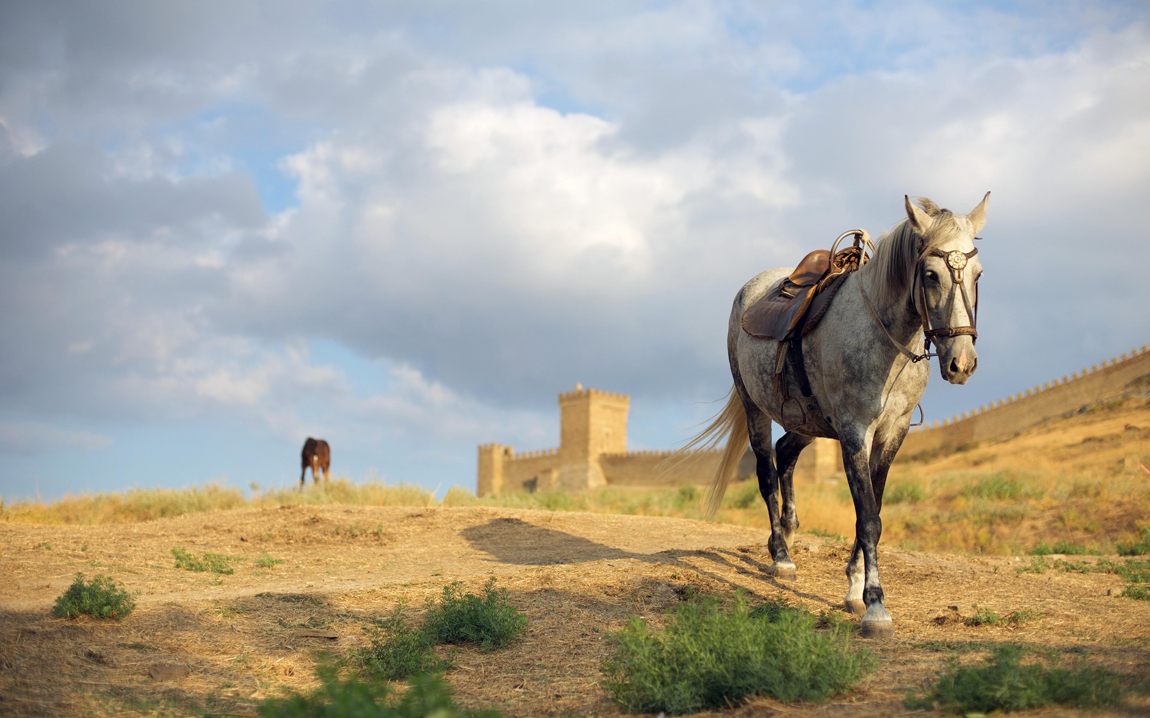 Фотографии Лошади Крепость Размытый фон Животные 3840x2400 лошадь боке животное