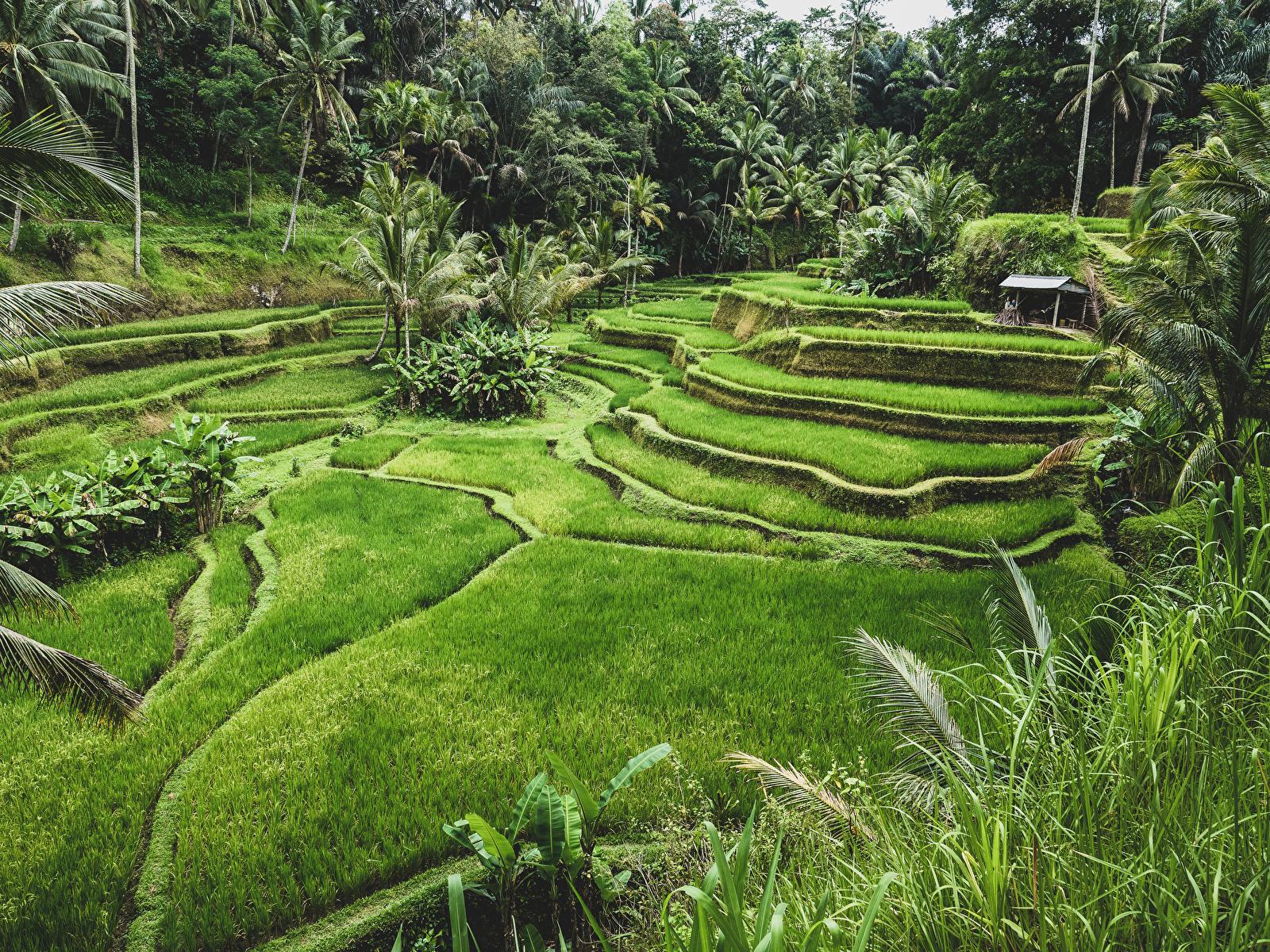 Fondos De Pantalla 1600x1200 Indonesia Zona Intertropical