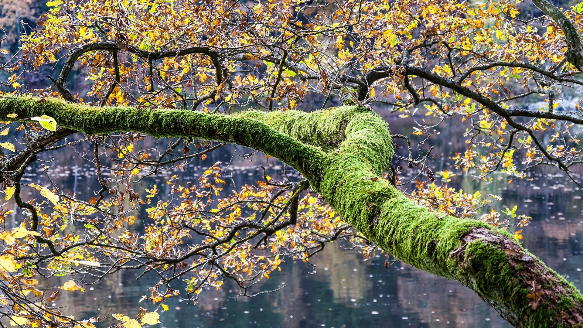 Fotos Natur Ast Laubmoose 1920x1080