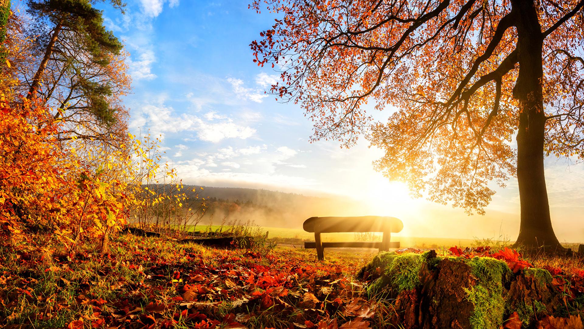 壁紙 19x1080 季節 秋 風景写真 木 木の葉 ベンチ 自然 ダウンロード 写真