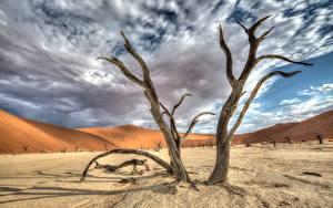 Fotos Afrika Himmel Bäume Sand Wolke HDRI Namib Naukluft Park, Deadvlei, Namibia
