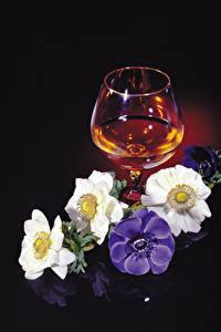Fotos Windröschen Alkoholische Getränke Schwarzer Hintergrund Weinglas Blumen Lebensmittel