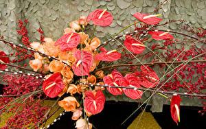 Fotos Anthurium Rosen Beere Ast Blumen