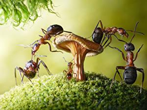 Fotos Ameisen Pilze Natur Hautnah lolita777 ein Tier