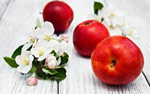 Fotos Äpfel Blühende Bäume Bretter Ast Lebensmittel