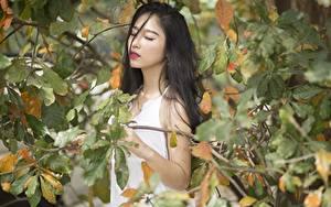 Hintergrundbilder Asiatische Herbst Ast Blatt Brünette