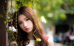 Wallpaper Asiatic Bokeh Brown haired Glance Girls