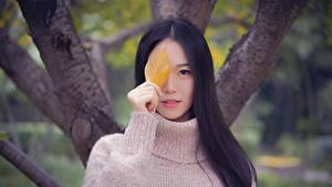 Bilder Asiaten Bokeh Starren Brünette Sweatshirt Hand Blattwerk