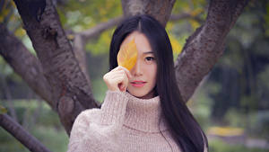 Bilder Asiaten Bokeh Starren Brünette Sweatshirt Hand Blattwerk Mädchens