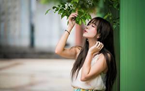 Bilder Asiaten Ast Brünette Bokeh Hand Mädchens