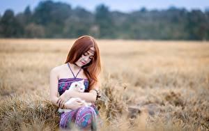 Fonds d'écran Asiatique Chat domestique Aux cheveux bruns S'asseyant Filles