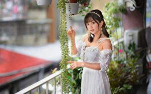 Fotos Asiatische Kleid Starren Bokeh junge Frauen