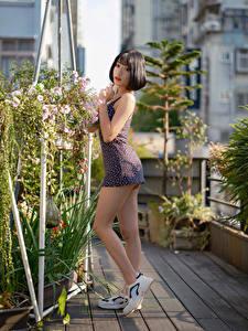 Hintergrundbilder Asiaten Kleid Bein Posiert Blick Mädchens