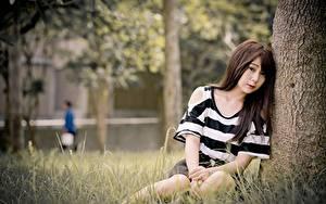 Fotos Asiaten Gras Bokeh Braunhaarige Sitzend