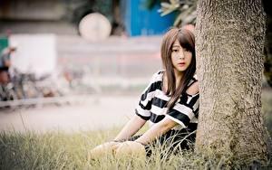 Hintergrundbilder Asiatisches Gras Unscharfer Hintergrund Braune Haare Sitzen Starren