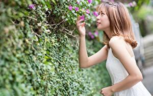 Fotos Asiaten Strauch Braunhaarige Bokeh Hand Mädchens