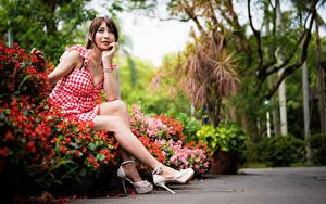 Fotos Asiatische Sitzend Kleid Bein Starren Braunhaarige Mädchens