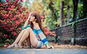 Fotos Asiatische Sitzt Bein Shorts Braunhaarige junge Frauen