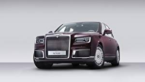 Desktop hintergrundbilder Grauer Hintergrund Bordeauxrot Vorne Limousine Russische Luxus Aurus, Senat S600, 2019 auto