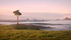 Fotos Australien Küste Bäume Nebel Maleny