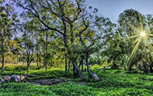 Hintergrundbilder Australien Bäume Sonne Lichtstrahl Gras Warrumbungles National Park