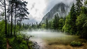 Bilder Österreich Gebirge See Bäume Nebel Obertraun