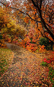 Picture Autumn Branches Foliage Nature