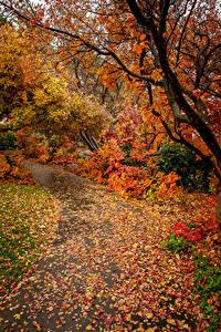 Hintergrundbilder Herbst Ast Blattwerk Natur