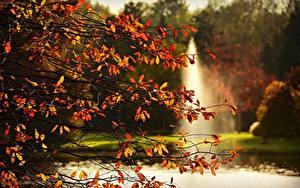 Fotos Herbst Ast Blatt Natur