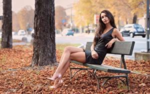 Bilder Herbst Blatt Bank (Möbel) Sitzen Braune Haare Kleid Hand Bein High Heels junge frau