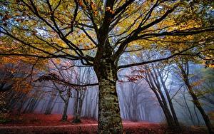 Fotos Herbst Wälder Bäume Nebel Ast Baumstamm Natur