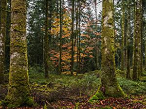 Fotos Herbst Wald Bäume Laubmoose Blatt Baumstamm