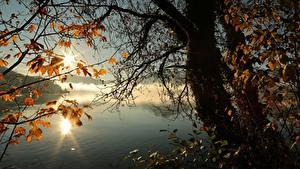 Bilder Herbst See Bäume Ast Blattwerk