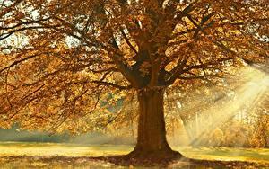 Bilder Herbst Lichtstrahl Bäume Ast Linden