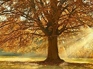 Bilder Herbst Lichtstrahl Bäume Ast Linden Natur