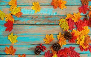 Fotos Herbst Ahorn Vorlage Grußkarte Bretter Blatt