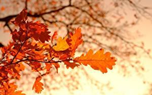 Hintergrundbilder Herbst Eichen Unscharfer Hintergrund Ast Blattwerk