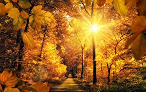 Fotos Herbst Park Wege Bäume Lichtstrahl Sonne Blattwerk