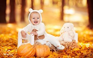 Fotos Herbst Kürbisse Säugling Glücklich Blattwerk Sitzend Kinder