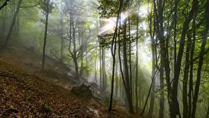 Fotos Herbst Lichtstrahl Nebel Blatt Bäume