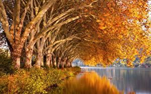 Hintergrundbilder Herbst Fluss Bäume Spiegelt Ast