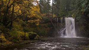 Fotos Herbst Vereinigte Staaten Wasserfall Flusse Bäume Oregon, Silver Falls State Park, Upper North Falls, Silver Creek