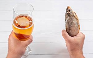 Desktop wallpapers Beer Fish - Food Hands Stemware Food