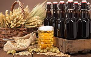 Hintergrundbilder Bier Echter Hopfen Flasche Weidenkorb Ähre Getreide Becher Schaum Lebensmittel