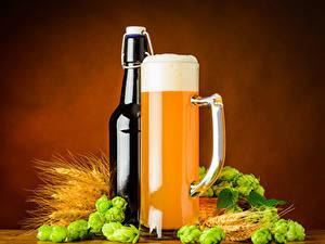 Bilder Bier Echter Hopfen Farbigen hintergrund Flasche Becher Schaum Ähren Lebensmittel