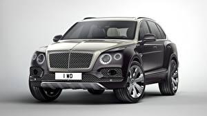 Hintergrundbilder Bentley Grau Grauer Hintergrund Softroader Luxus Metallisch  auto